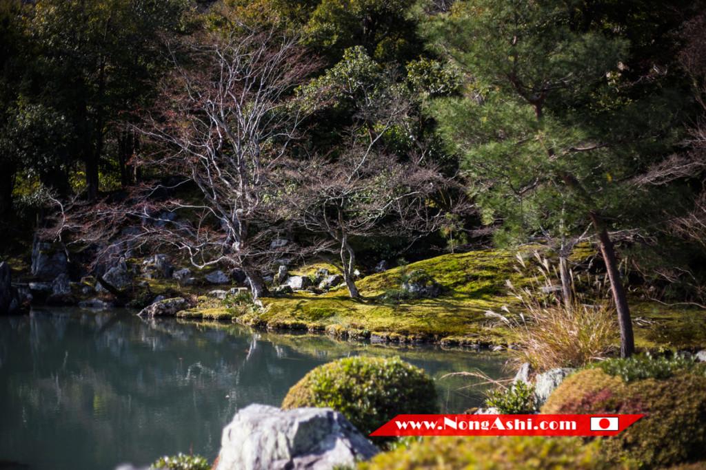 สวนภายในวัด Tenryuji