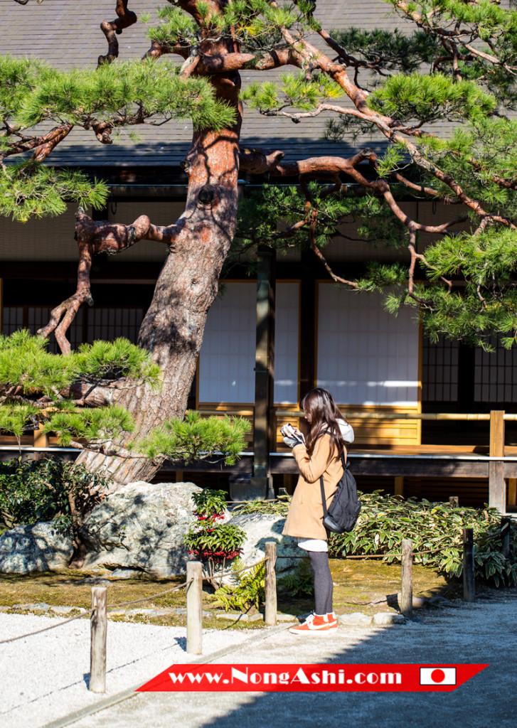 นักท่องเที่ยวเก็บภาพความสวยงามของวัดเทนริวจิ