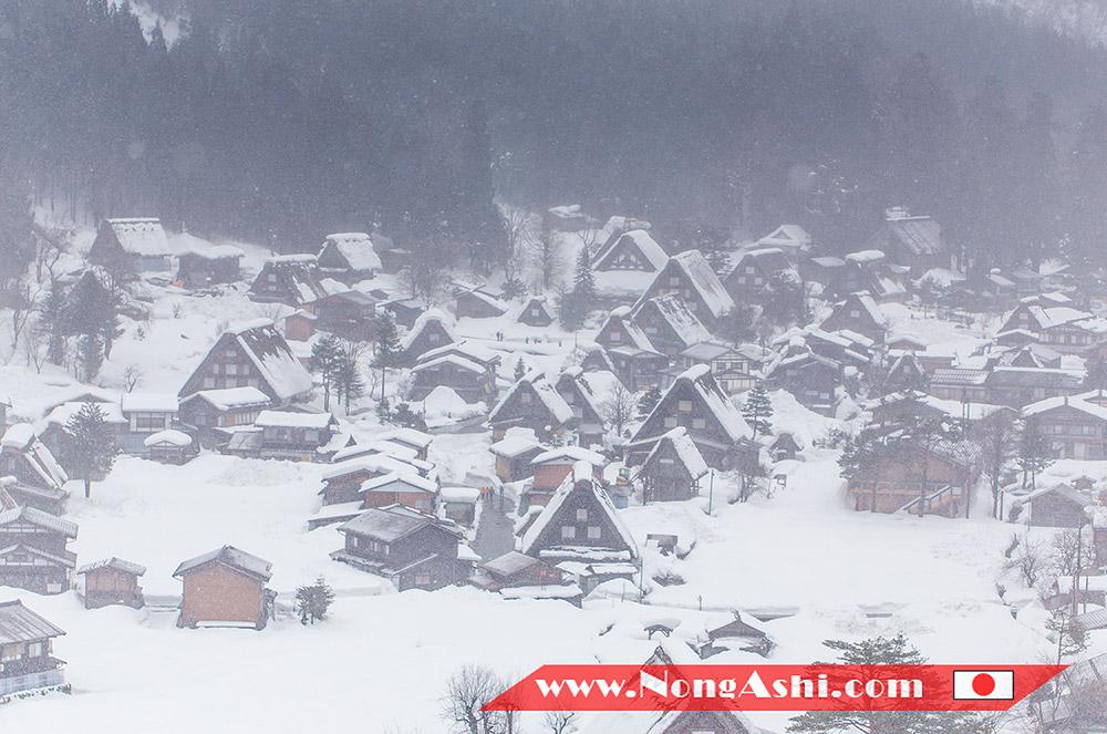 หมู่บ้านมรดกโลก ชิราคาวาโกะ